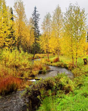 Beautiful fall landscape near Talkeetna, Alaska